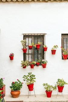 赤い土鍋の植物とスペインの典型的なアンダルシアの家の美しい白いファサード