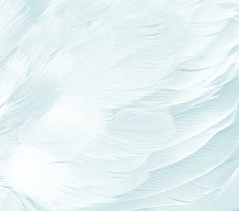 Beautiful white feather texture background