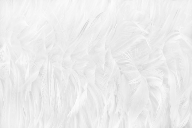 Beautiful white feathers texture background.