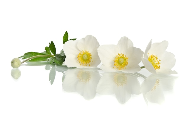Beautiful white flower isolated on white
