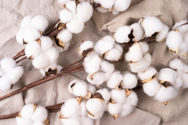 Beautiful white flowers of cotton plant on rough textural linen cloth spa setting cotton flowers