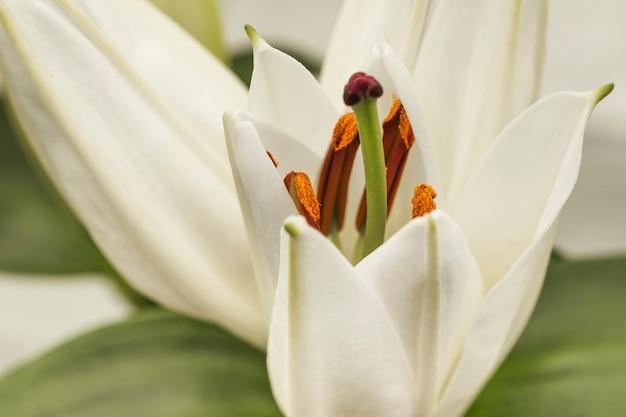 Красивый белый свежий цветок