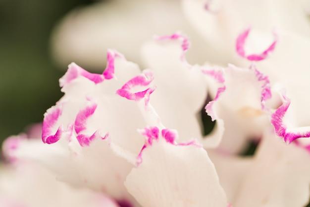 Beautiful white fresh petals