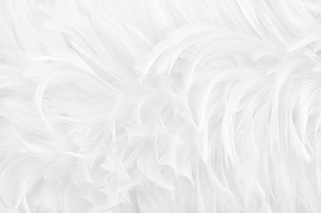 Beautiful white grey bird feathers surface texture background.