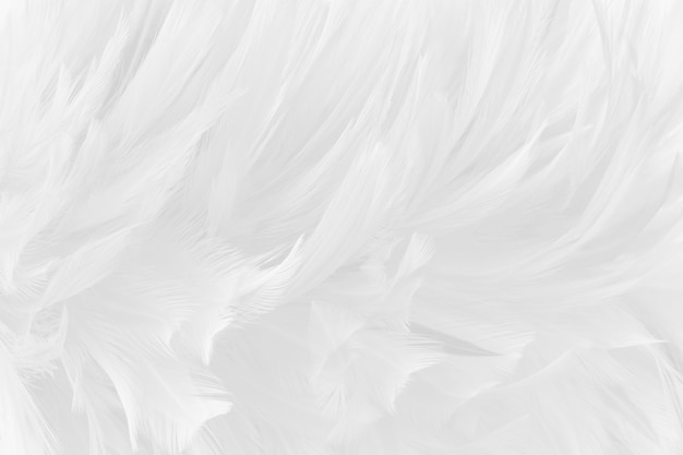 Beautiful white grey bird feathers texture background.