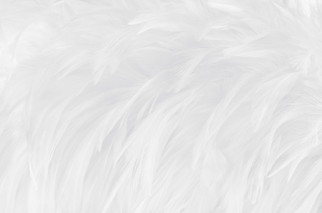 美しい白灰色の鳥の羽のテクスチャ背景。