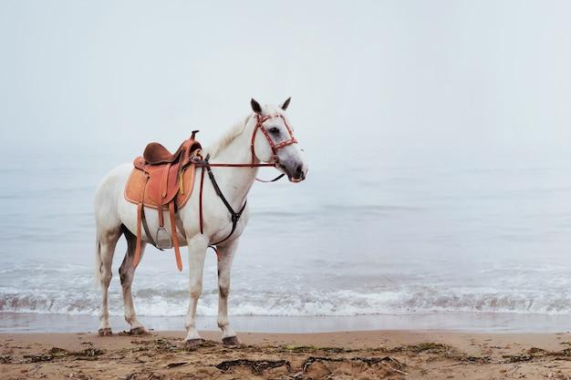Красивый белый конь у моря в тумане.