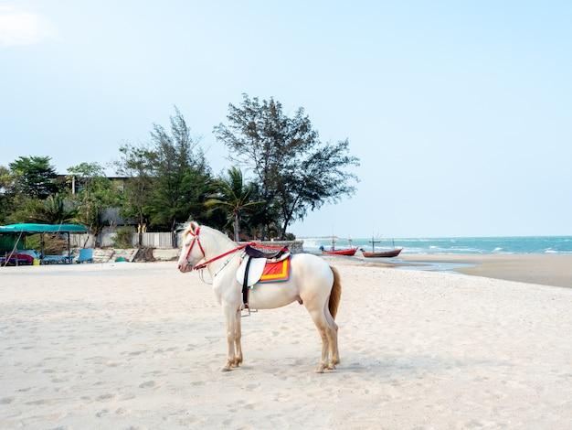Красивая белая лошадь на пляже в хуа хин, таиланд.