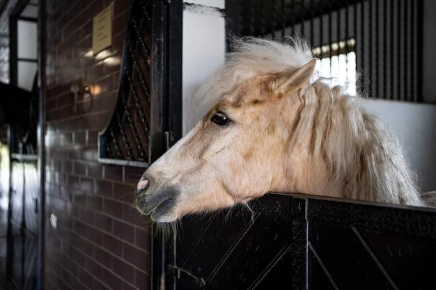 厩舎の屋台に青々としたたてがみを持つ美しい白い馬。乗馬クラブと乗馬クラス