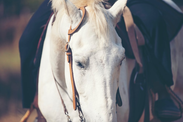 Beautiful white horse with long mane portrait