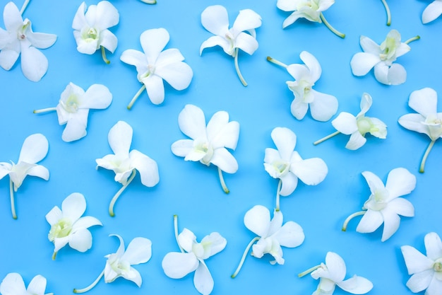 Красивые белые цветки орхидеи на синем фоне.