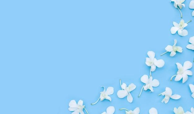 파란색 배경에 아름 다운 흰색 난초 꽃입니다.