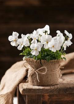 荒布で作られた鍋に美しい白いパンジーの花。ビオラコルヌータ。