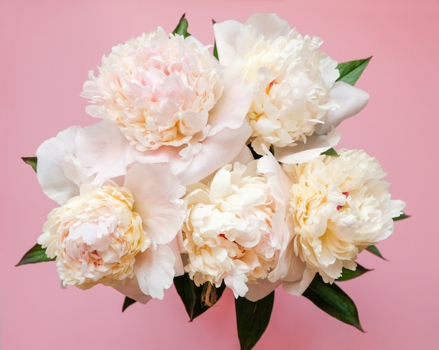 Beautiful white peony bouquet close-up on pink . top view. flat lay