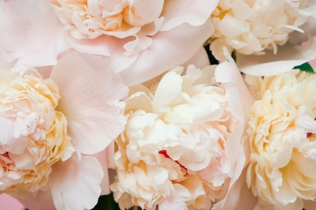 Beautiful white peony flowers close-up. top view. flat lay