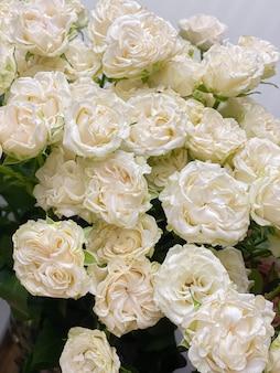 Красивые белые кустовые розы пионовидной формы. нежный весенний букет из белых цветов, романтика