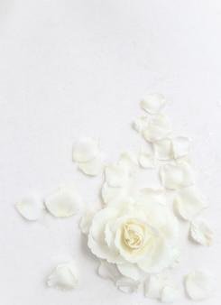 白い背景の上の美しい白いバラと花びら。結婚式、誕生日、バレンタインデー、母の日のグリーティングカードに最適です