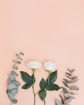 Beautiful white rose flower with branch of eucalyptus  holiday concept nature background color trends