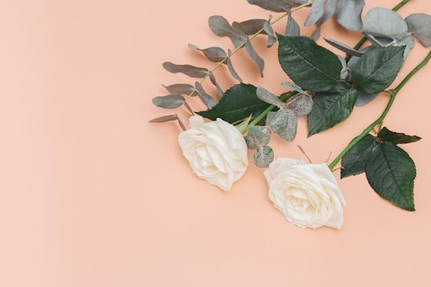 유칼립투스의 분기와 아름 다운 흰 장미 꽃