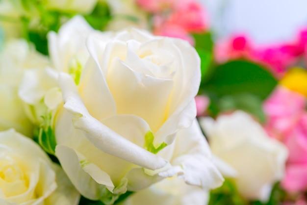 아름 다운 흰 장미입니다. 꽃 축제 자연 배경입니다.