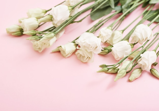 Beautiful white roses on pink table