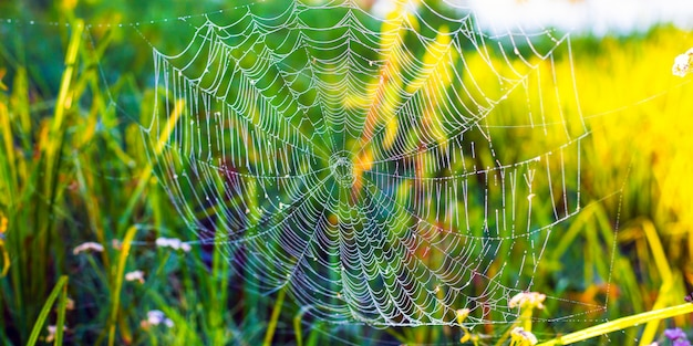 緑の草の背景に美しい白いクモの巣。