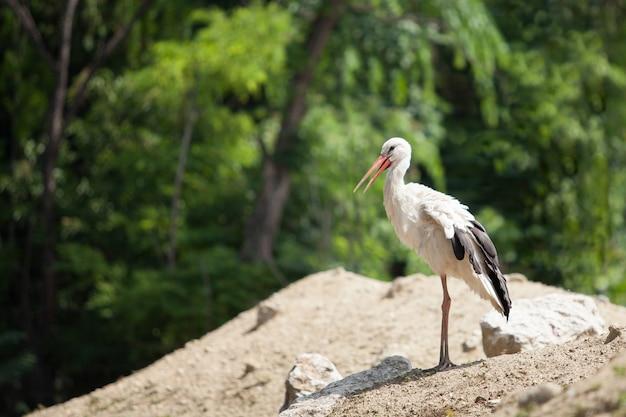 아름다운 흰 황새는 푸른 나무에 대 한 모래 언덕에 서