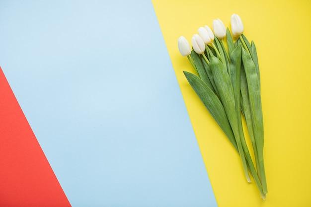 コピースペースと色とりどりの紙の背景に美しい白いチューリップ。春、夏、花、色のコンセプト、女性の日。