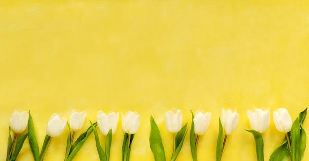 Красивые белые тюльпаны на желтом