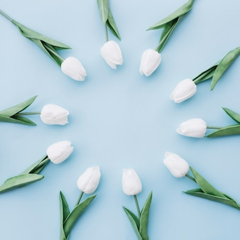 Beautiful white tulips placed in a circle on blue background with copy space in the center