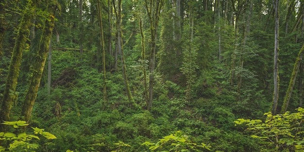 Bella ripresa ampia di una foresta con alberi coperti di muschio e piante a foglia verde
