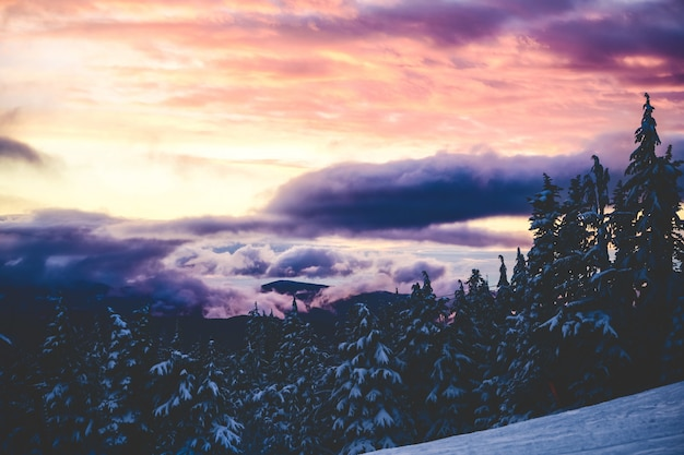 Beautiful wide shot of spruces under a pink and purple sky with clouds