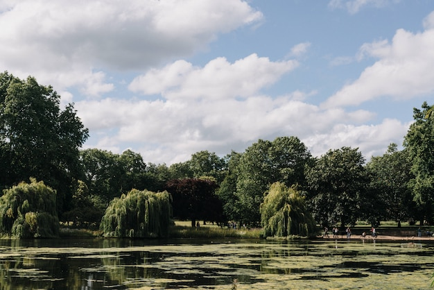 Beautiful wide shot of trees near a lake under a clear blue sky with white clouds