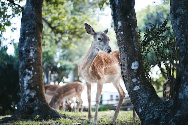 Красивый дикий олень в природе