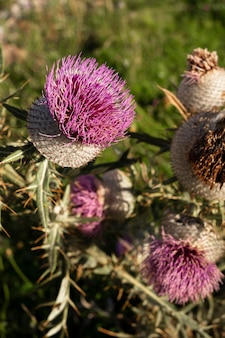 Beautiful wild flower close-up