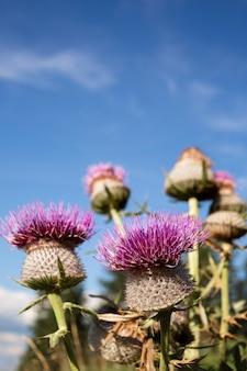 아름 다운 야생 꽃 클로즈업