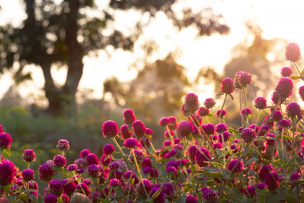 Beautiful wild flower with back light of sunset