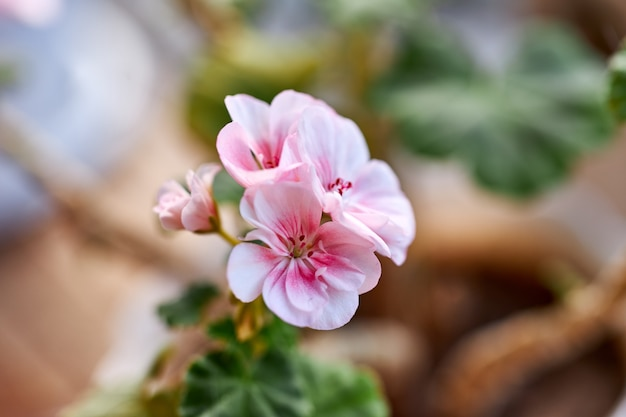 美しい野生の花や植物は太陽の下で育ちます