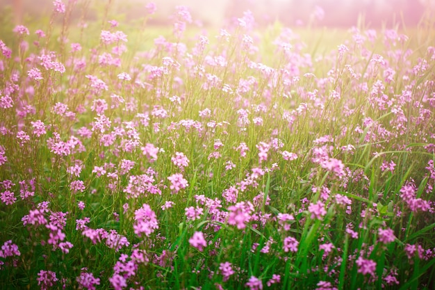 Beautiful wild flowers in the green grass.