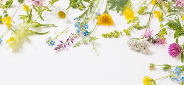 白い壁に美しい野生の花