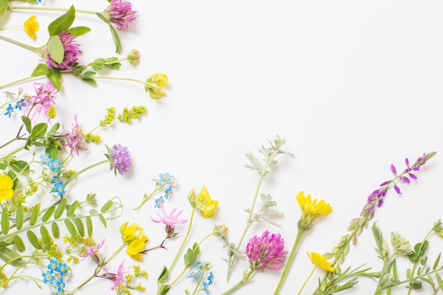 Beautiful wild flowers on white background