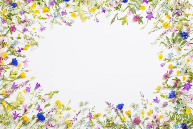 Beautiful wild flowers on white background