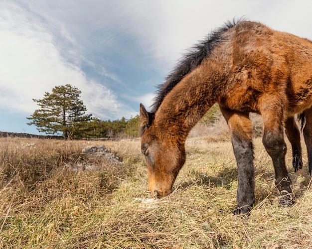 Bellissimo cavallo selvaggio nella foresta