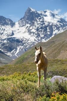 山の中の美しい野生の馬