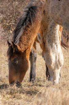Bellissimi cavalli selvaggi nella foresta