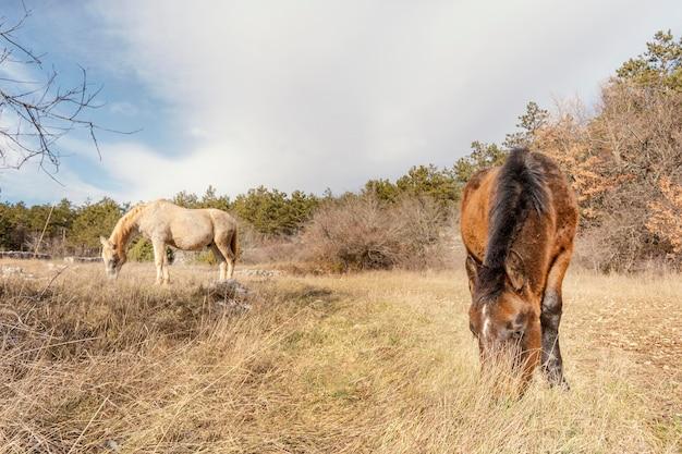 Красивые дикие лошади в лесу