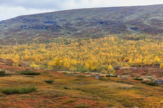 Beautiful wild nature of sarek national park in sweden lapland with snow-capped mountain peaks