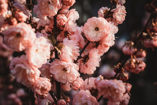 Beautiful wild rose