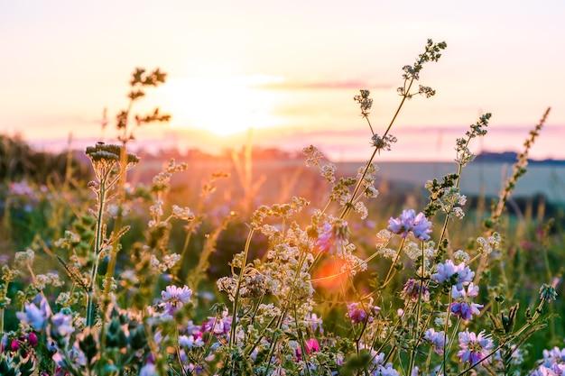 푸른 초원의 아름다운 야생화, 일몰 동안 밝은 초원이 있는 따뜻한 여름 저녁.