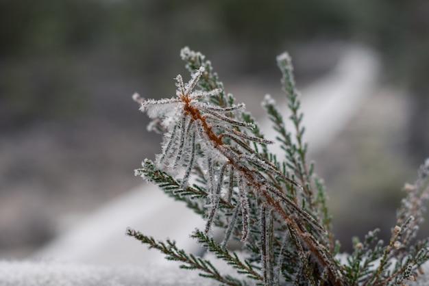 美しい冬の背景、沼の霧氷